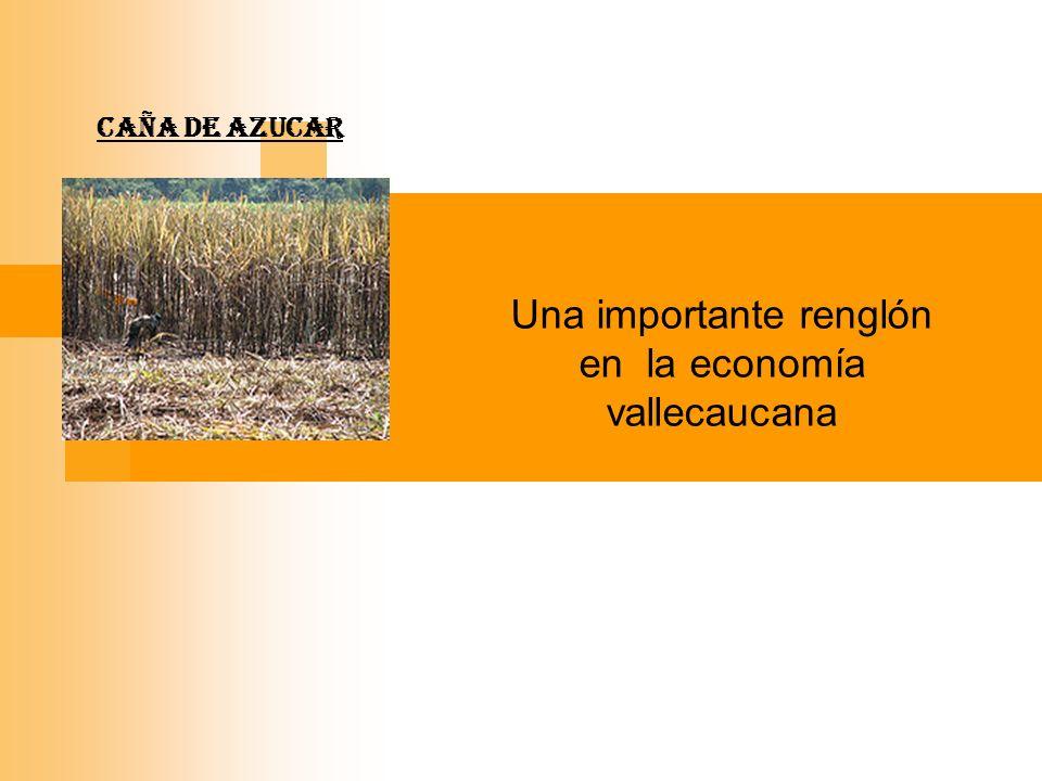 CAÑA DE AZUCAR Una importante renglón en la economía vallecaucana