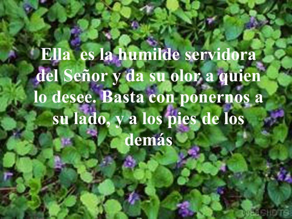 Ella es la humilde servidora del Señor y da su olor a quien lo desee.