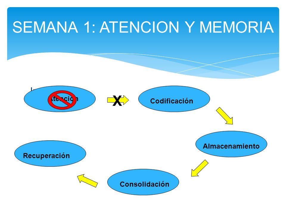 Inattention: SEMANA 1: ATENCION Y MEMORIA Atención Codificación Almacenamiento Consolidación Recuperación X
