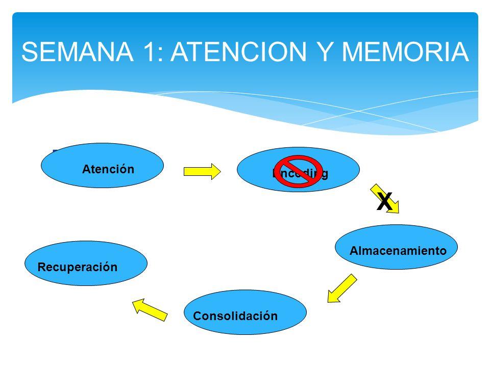 Poor encoding SEMANA 1: ATENCION Y MEMORIA Atención Encoding Almacenamiento Consolidación Recuperación X