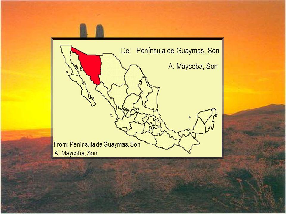 De: Península de Guaymas, Son A: Maycoba, Son From: Península de Guaymas, Son A: Maycoba, Son