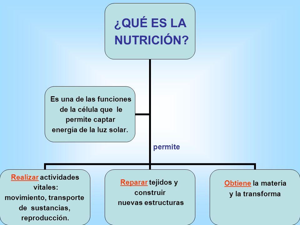 LA NUTRICIÓN DE LAS PLANTAS TIPOS DE NUTRICIÓN POR EL MODO DE OBTENER ENERGIA NUTRICIÓN AUTÓTROFA POR EL TIPO DE ENERGIA QUE UTILIZA NUTRICIÓN HETERÓT