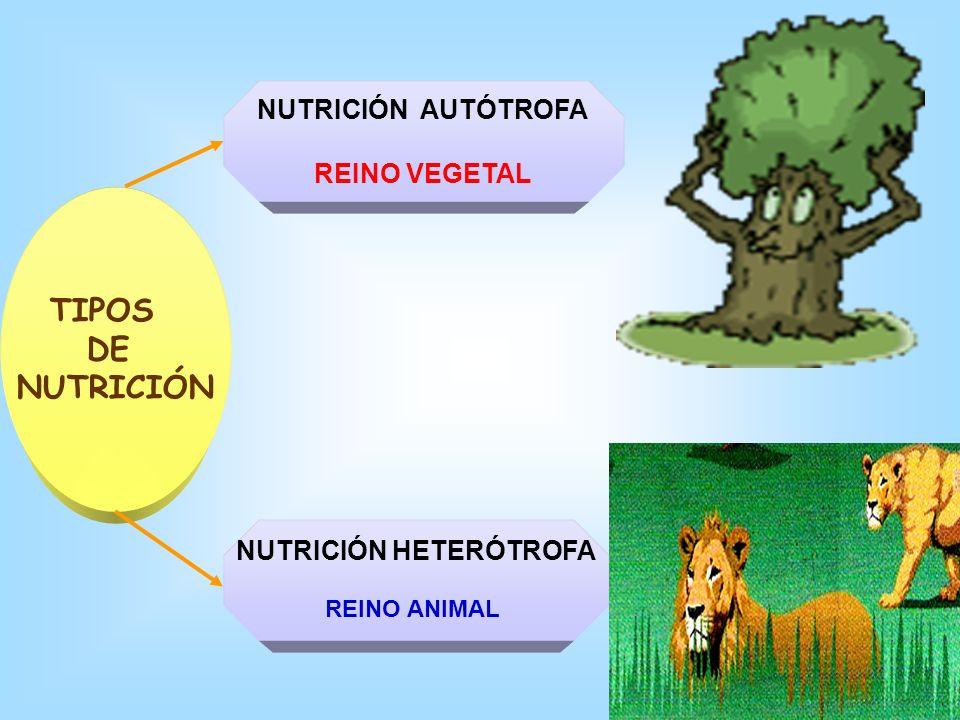 ¿QUÉ ES LA NUTRICIÓN? Realizar actividades vitales: movimiento, transporte de sustancias, reproducción. Reparar tejidos y construir nuevas estructuras
