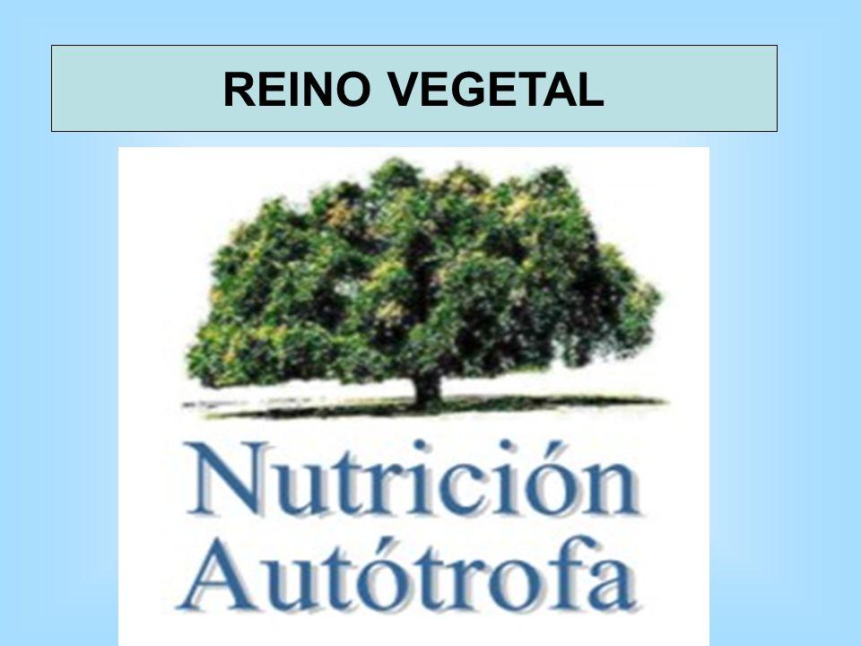 TIPOS DE NUTRICIÓN NUTRICIÓN AUTÓTROFA REINO VEGETAL NUTRICIÓN HETERÓTROFA REINO ANIMAL