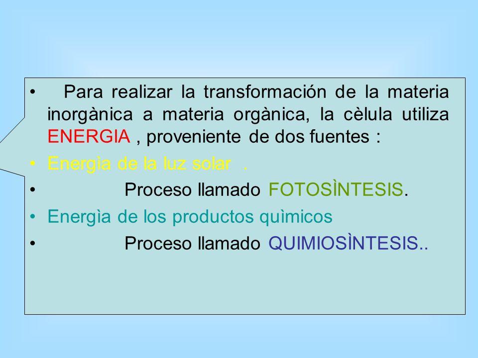 BIO ELEMENTOS 0 (BIOMÓLECULAS, 0 ELEMENTOS QUÍMICOS) BIO ELEMENTOS 0 (BIOMÓLECULAS, 0 ELEMENTOS QUÍMICOS) BIOELEMENTOS INORGÁNICOS: AGUA (H20) SALES M