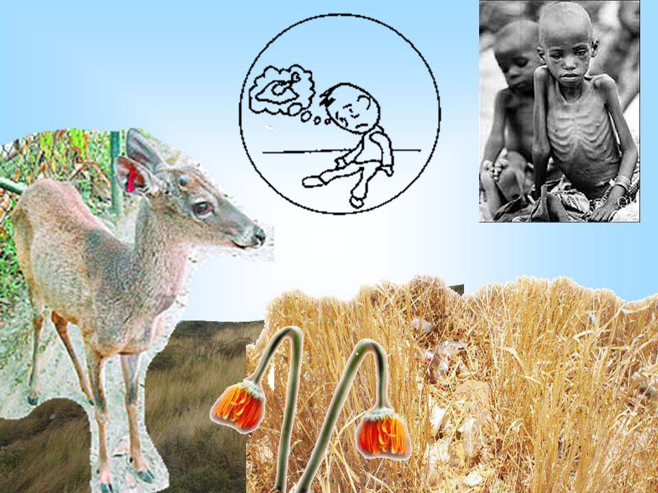 Ciencia, Tecnología y Ambiente LA TRANSFERENCIA DE LA ENERGIA EN LOS VEGETALES I.E LUCIE RYNNING DE ANTÚNEZ DE MAYOLO UGEL Nº 02 RÍMAC Lic. Angélica C