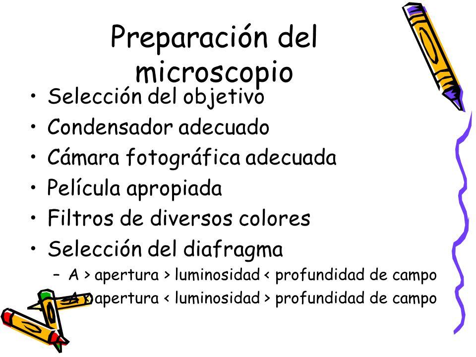 Preparación del microscopio Selección del objetivo Condensador adecuado Cámara fotográfica adecuada Película apropiada Filtros de diversos colores Selección del diafragma –A > apertura > luminosidad < profundidad de campo –A profundidad de campo
