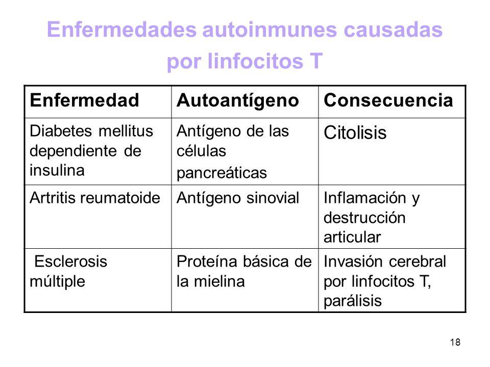 18 Enfermedades autoinmunes causadas por linfocitos T EnfermedadAutoantígenoConsecuencia Diabetes mellitus dependiente de insulina Antígeno de las cél