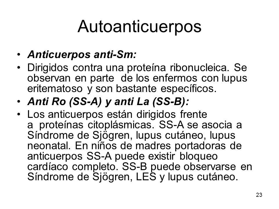 23 Autoanticuerpos Anticuerpos anti-Sm: Dirigidos contra una proteína ribonucleica. Se observan en parte de los enfermos con lupus eritematoso y son b