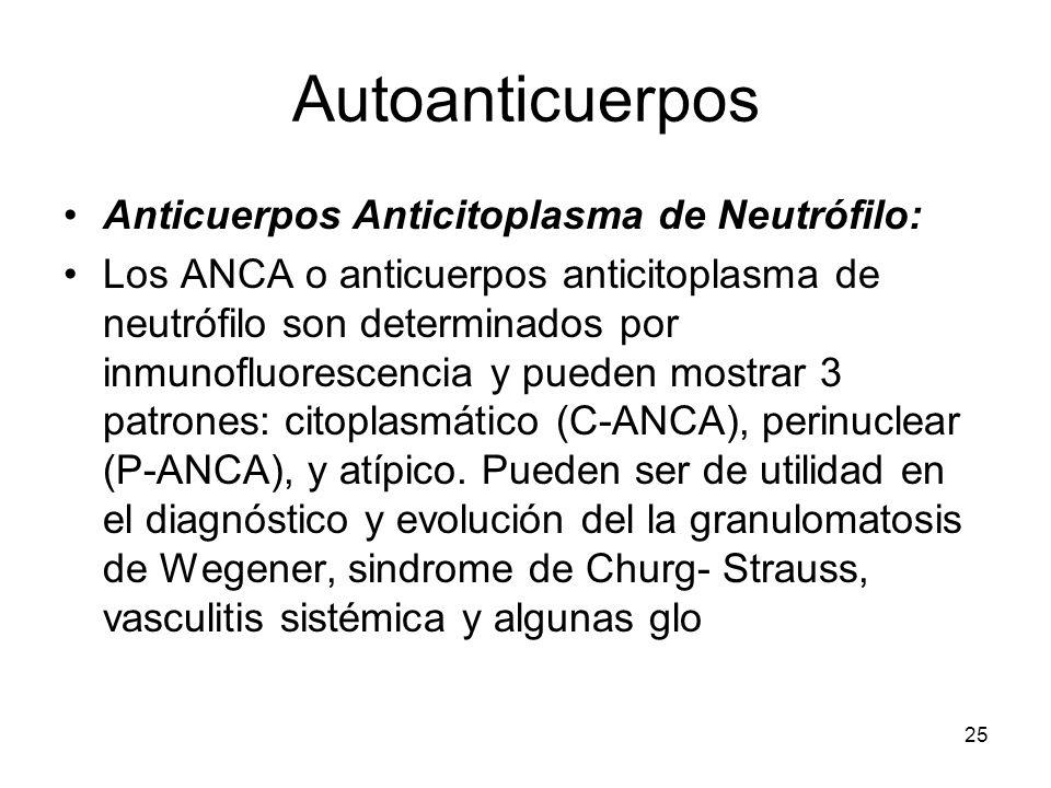 25 Autoanticuerpos Anticuerpos Anticitoplasma de Neutrófilo: Los ANCA o anticuerpos anticitoplasma de neutrófilo son determinados por inmunofluorescen
