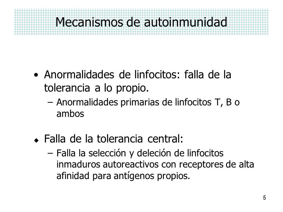 5 Mecanismos de autoinmunidad Anormalidades de linfocitos: falla de la tolerancia a lo propio. –Anormalidades primarias de linfocitos T, B o ambos u F