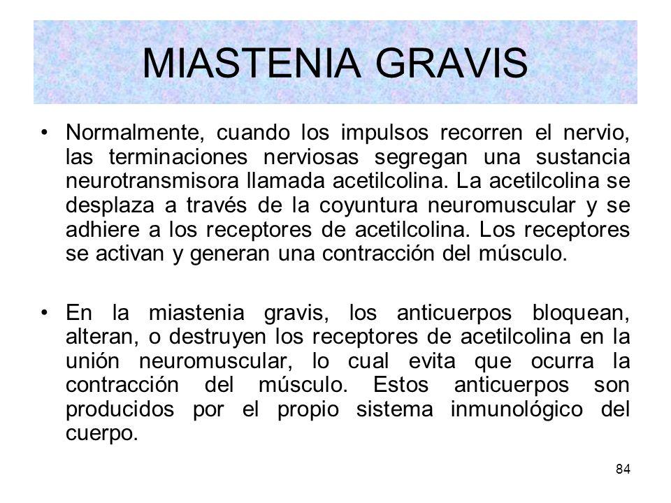84 MIASTENIA GRAVIS Normalmente, cuando los impulsos recorren el nervio, las terminaciones nerviosas segregan una sustancia neurotransmisora llamada a