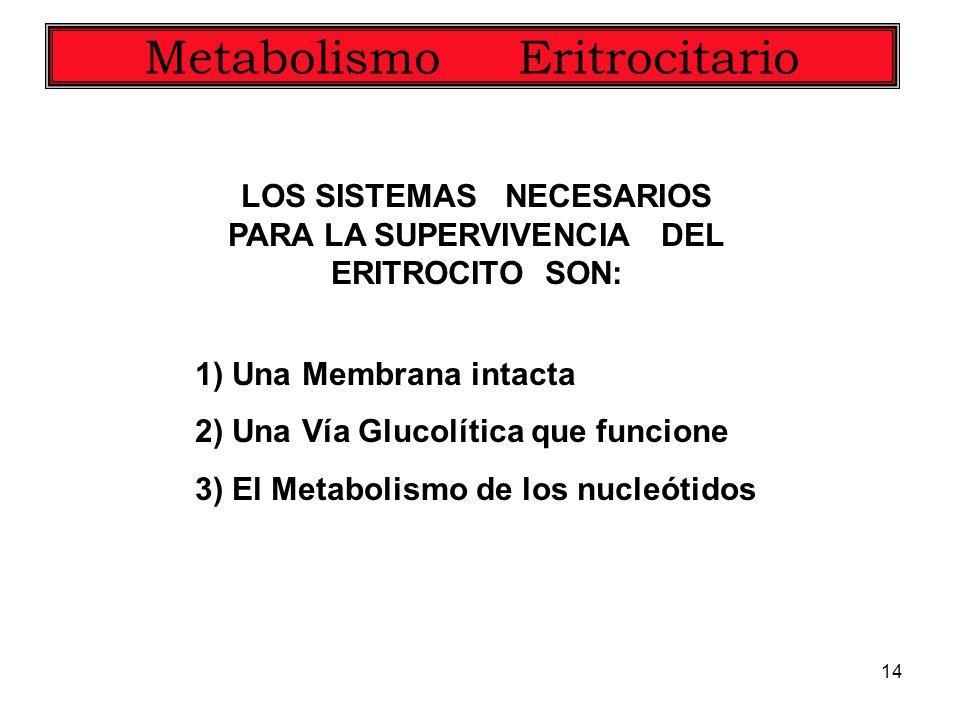 14 Metabolismo Eritrocitario LOS SISTEMAS NECESARIOS PARA LA SUPERVIVENCIA DEL ERITROCITO SON: 1) Una Membrana intacta 2) Una Vía Glucolítica que func