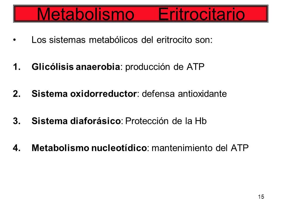 15 Los sistemas metabólicos del eritrocito son: 1.Glicólisis anaerobia: producción de ATP 2.Sistema oxidorreductor: defensa antioxidante 3.Sistema dia