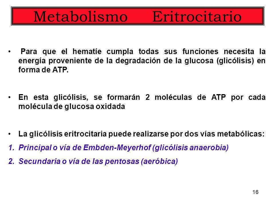 16 Metabolismo Eritrocitario Para que el hematíe cumpla todas sus funciones necesita la energía proveniente de la degradación de la glucosa (glicólisi