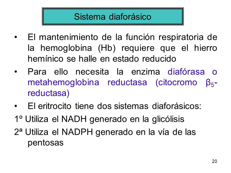 20 El mantenimiento de la función respiratoria de la hemoglobina (Hb) requiere que el hierro hemínico se halle en estado reducido Para ello necesita l