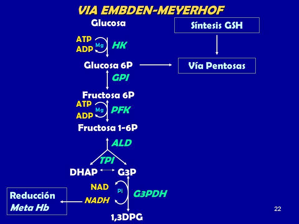 22 Glucosa Glucosa 6P GPI Fructosa 6P Fructosa 1-6P ATP ADP HK Mg DHAPG3P ALD TPI 1,3DPG NAD NADH G3PDHPi PFK Mg ATP ADP Vía Pentosas Síntesis GSH VIA