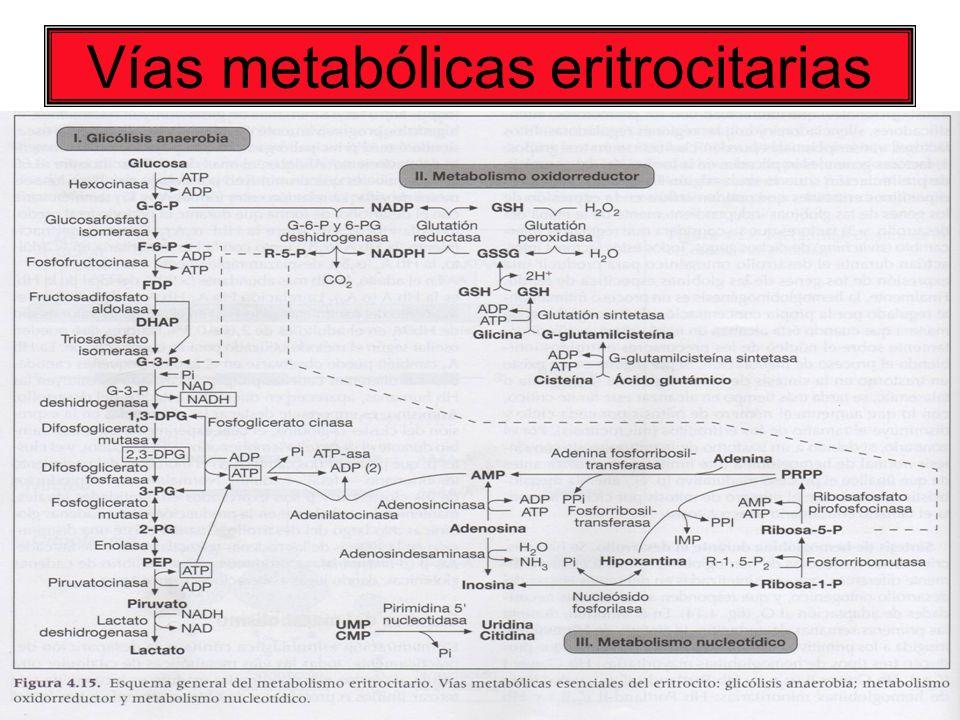 27 Vías metabólicas eritrocitarias