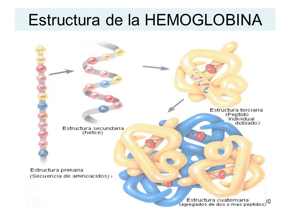 30 Estructura de la HEMOGLOBINA