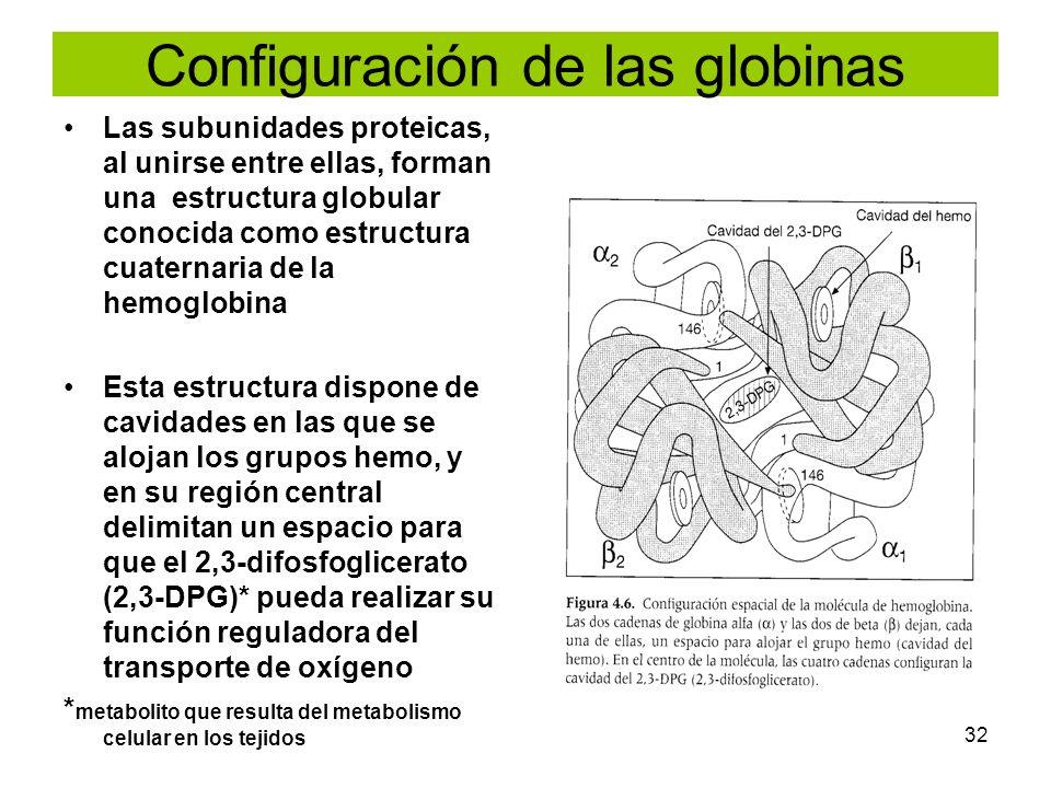 32 Configuración de las globinas Las subunidades proteicas, al unirse entre ellas, forman una estructura globular conocida como estructura cuaternaria