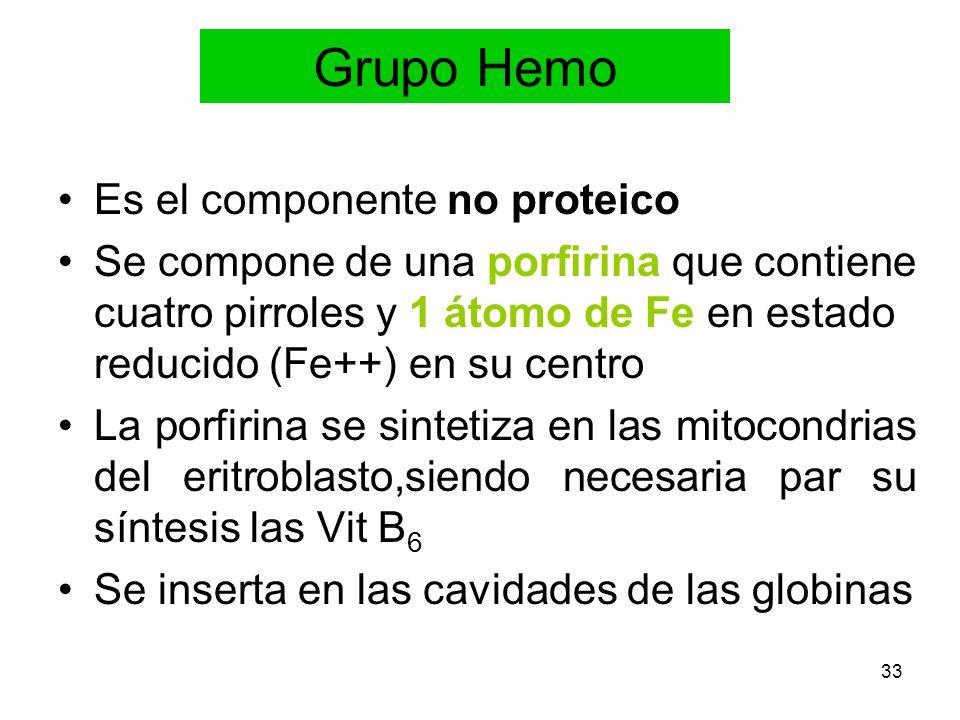 33 Grupo Hemo Es el componente no proteico Se compone de una porfirina que contiene cuatro pirroles y 1 átomo de Fe en estado reducido (Fe++) en su ce