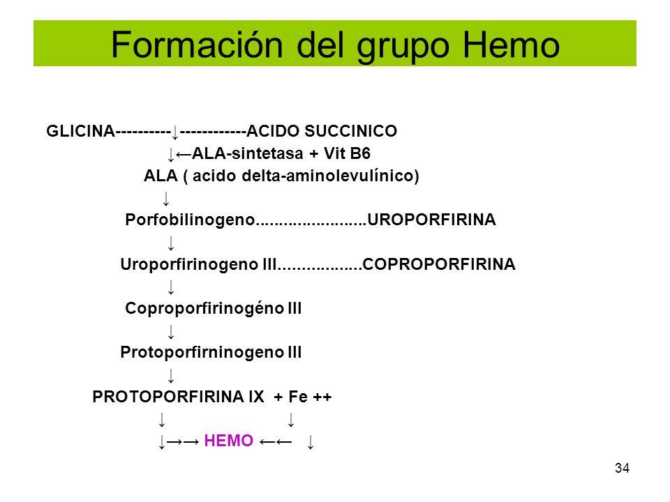 34 Formación del grupo Hemo GLICINA----------------------ACIDO SUCCINICO ALA-sintetasa + Vit B6 ALA ( acido delta-aminolevulínico) Porfobilinogeno....
