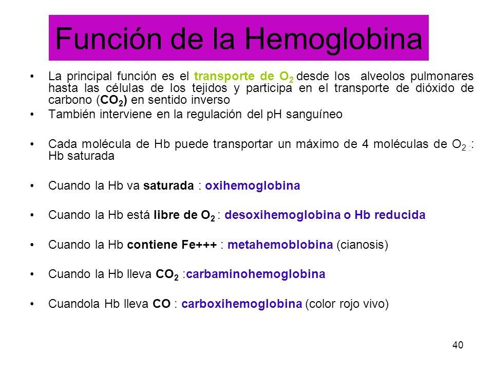 40 Función de la Hemoglobina La principal función es el transporte de O 2 desde los alveolos pulmonares hasta las células de los tejidos y participa e