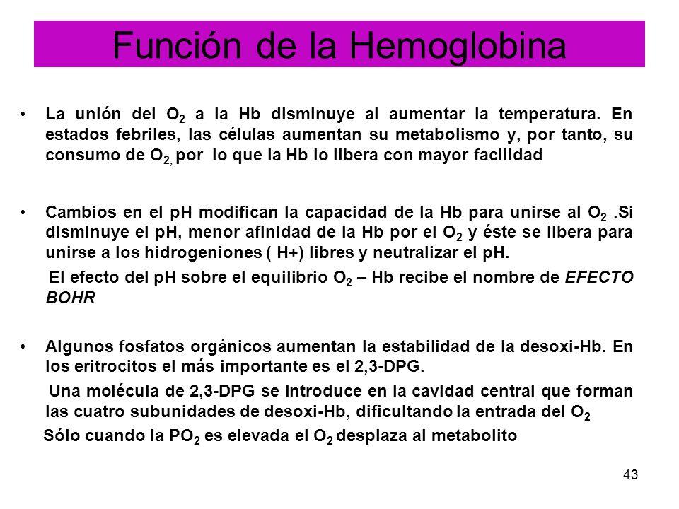 43 La unión del O 2 a la Hb disminuye al aumentar la temperatura. En estados febriles, las células aumentan su metabolismo y, por tanto, su consumo de