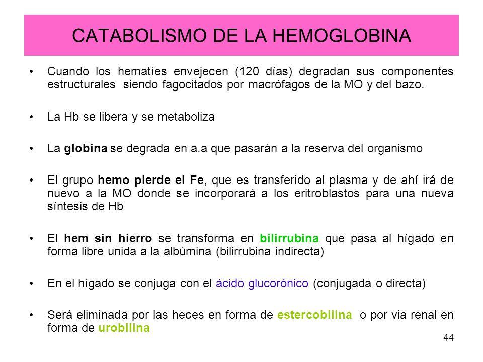 44 CATABOLISMO DE LA HEMOGLOBINA Cuando los hematíes envejecen (120 días) degradan sus componentes estructurales siendo fagocitados por macrófagos de