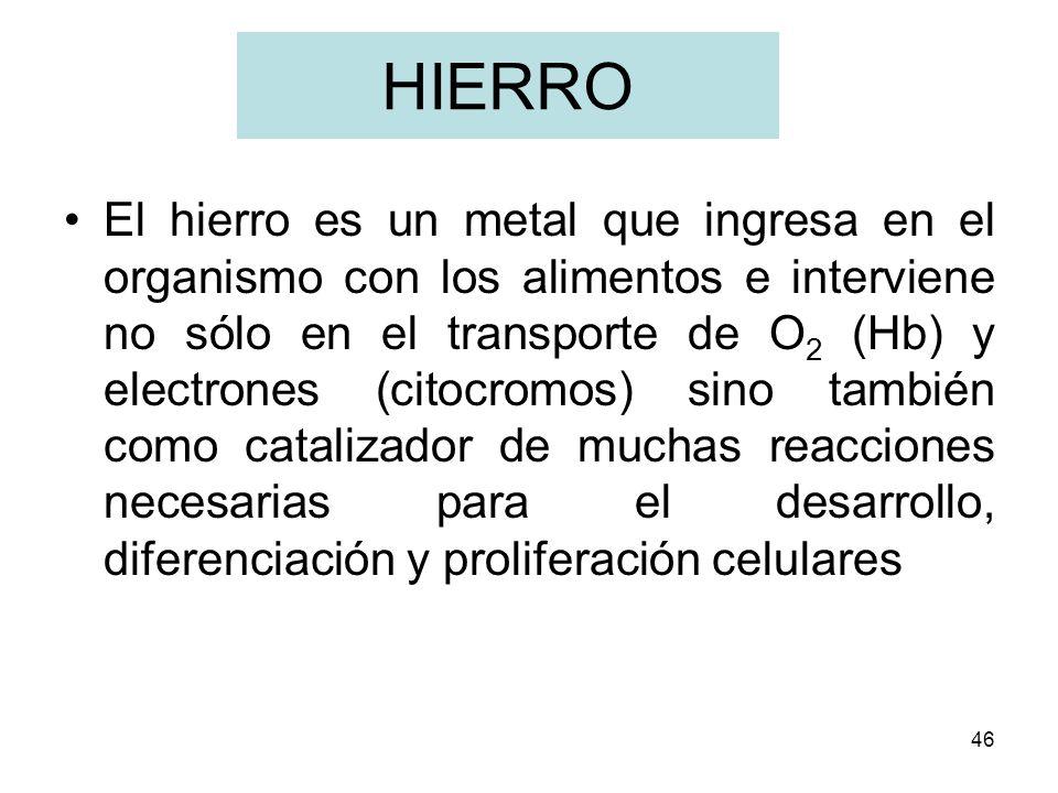 46 HIERRO El hierro es un metal que ingresa en el organismo con los alimentos e interviene no sólo en el transporte de O 2 (Hb) y electrones (citocrom