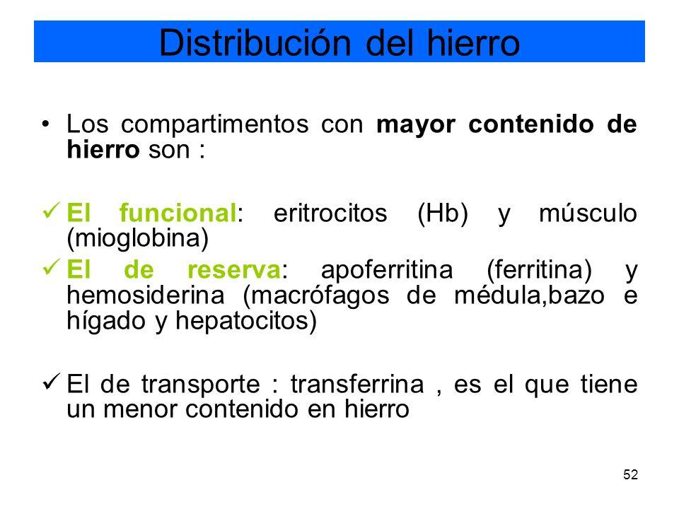 52 Los compartimentos con mayor contenido de hierro son : El funcional: eritrocitos (Hb) y músculo (mioglobina) El de reserva: apoferritina (ferritina