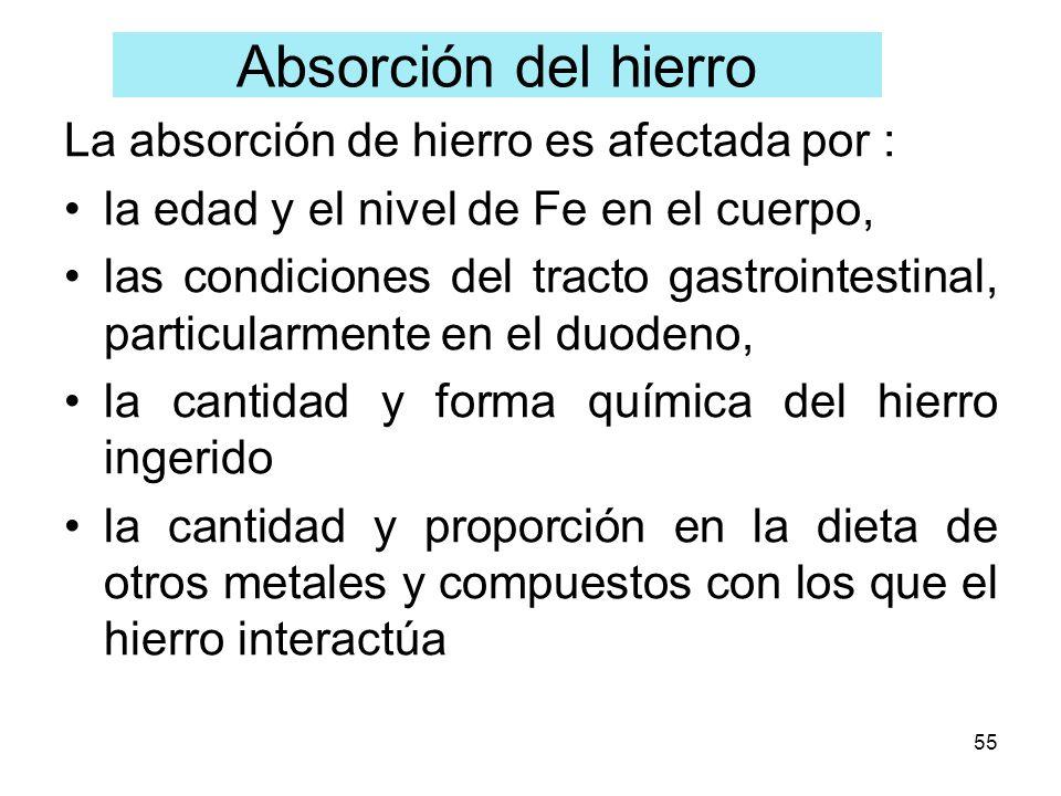 55 La absorción de hierro es afectada por : la edad y el nivel de Fe en el cuerpo, las condiciones del tracto gastrointestinal, particularmente en el