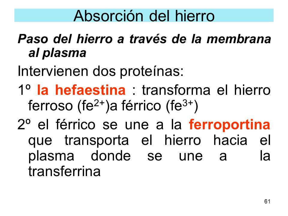 61 Paso del hierro a través de la membrana al plasma Intervienen dos proteínas: 1º la hefaestina : transforma el hierro ferroso (fe 2+ )a férrico (fe