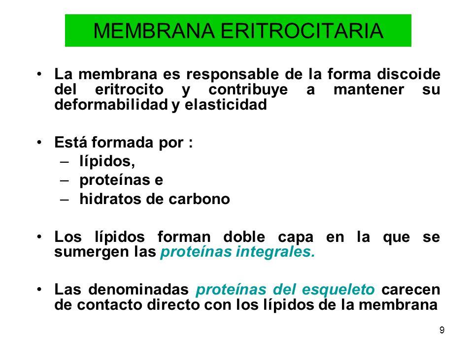 9 MEMBRANA ERITROCITARIA La membrana es responsable de la forma discoide del eritrocito y contribuye a mantener su deformabilidad y elasticidad Está f