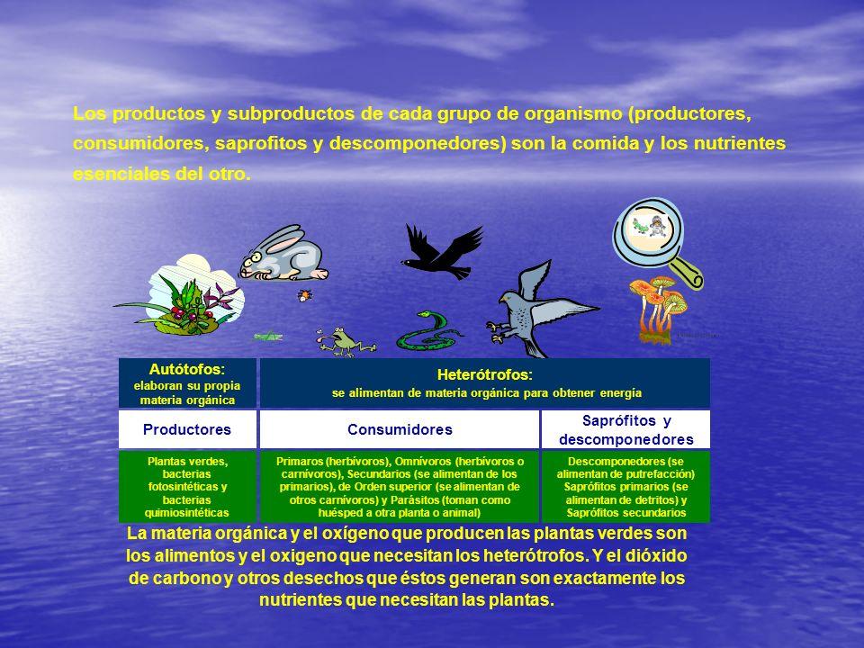 Productores Los productos y subproductos de cada grupo de organismo (productores, consumidores, saprofitos y descomponedores) son la comida y los nutr