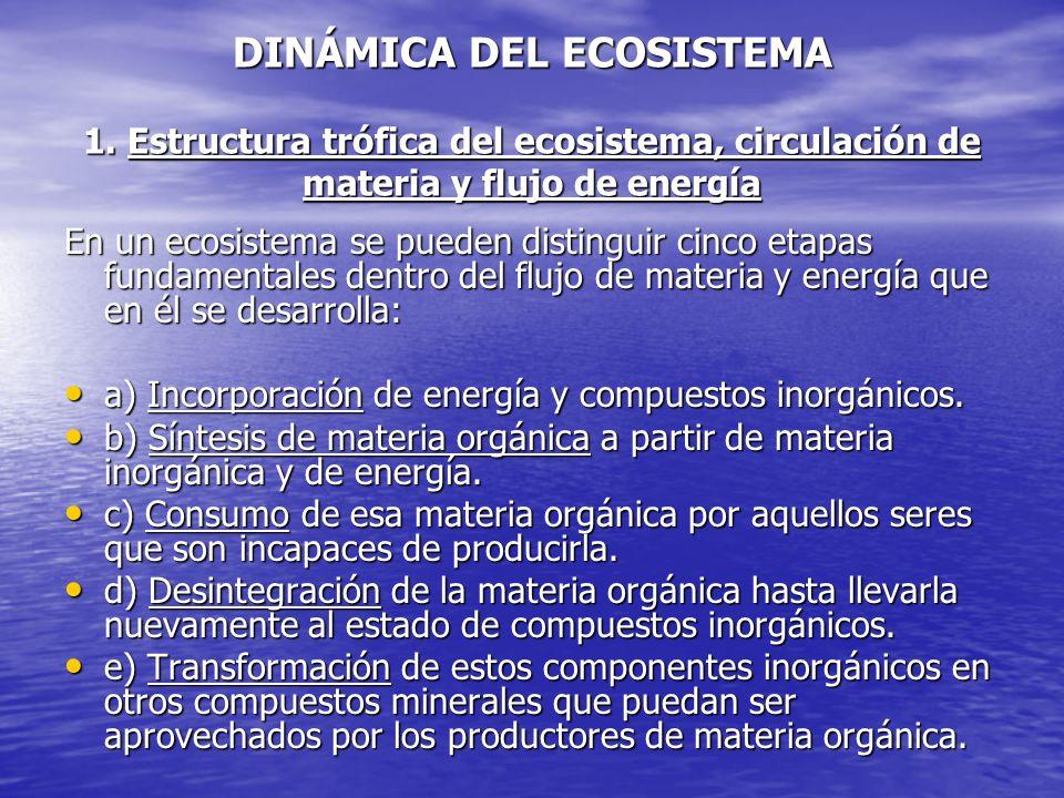 DINÁMICA DEL ECOSISTEMA 1. Estructura trófica del ecosistema, circulación de materia y flujo de energía En un ecosistema se pueden distinguir cinco et
