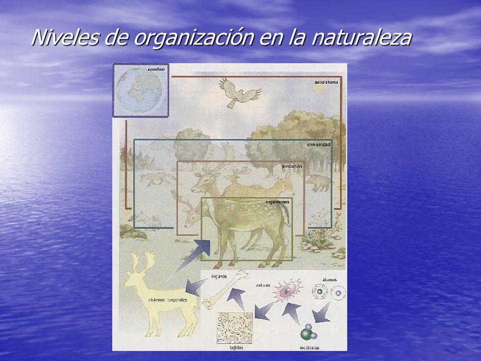 El ecosistema El ecosistema (término propuesto en 1935 por el ecólogo inglés A.