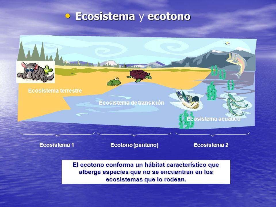 Ecosistema ecotono Ecosistema y ecotono El ecotono conforma un hábitat característico que alberga especies que no se encuentran en los ecosistemas que