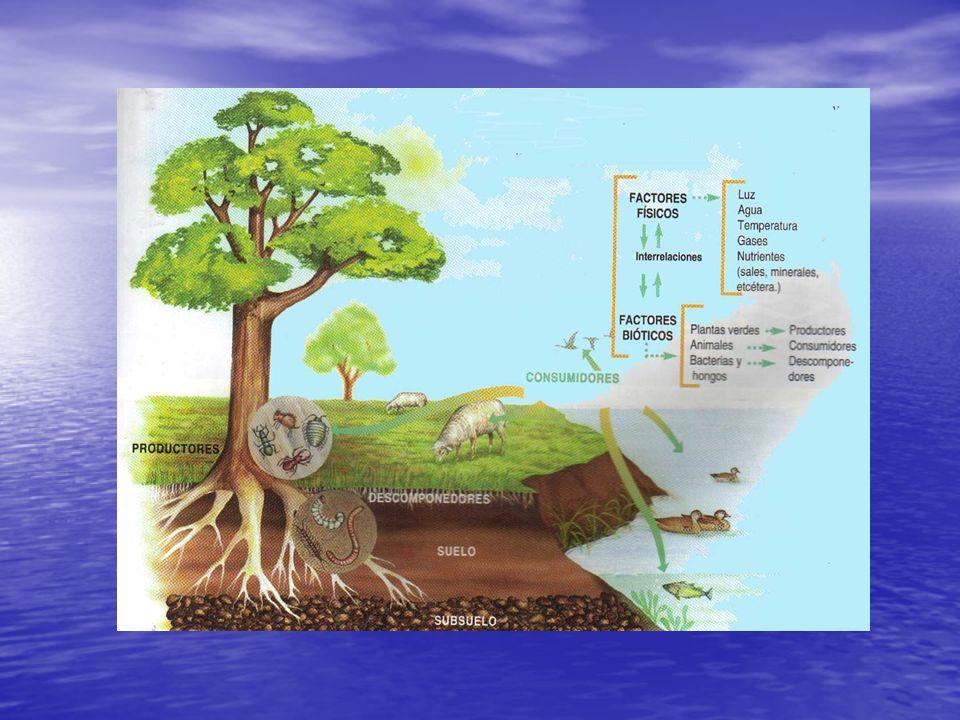 Componentes del ecosistema: factores bióticos Los productores u organismos autótrofos: capaces de sintetizar materiales orgánicos complejos a partir de sustancias inorgánicas simples (las plantas).