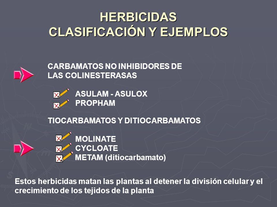 HERBICIDAS CLASIFICACIÓN Y EJEMPLOS CARBAMATOS NO INHIBIDORES DE LAS COLINESTERASAS ASULAM - ASULOX PROPHAM TIOCARBAMATOS Y DITIOCARBAMATOS MOLINATE C