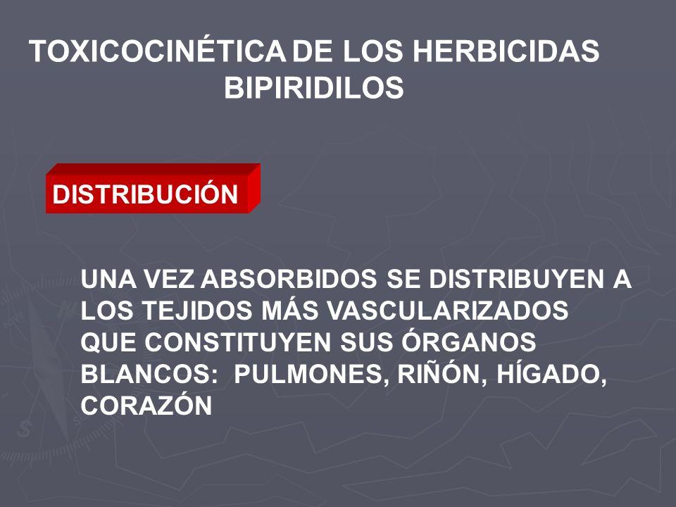 TOXICOCINÉTICA DE LOS HERBICIDAS BIPIRIDILOS DISTRIBUCIÓN UNA VEZ ABSORBIDOS SE DISTRIBUYEN A LOS TEJIDOS MÁS VASCULARIZADOS QUE CONSTITUYEN SUS ÓRGAN