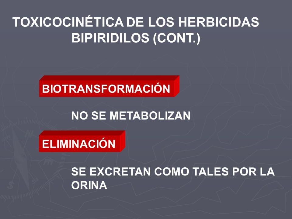 TOXICOCINÉTICA DE LOS HERBICIDAS BIPIRIDILOS (CONT.) BIOTRANSFORMACIÓN NO SE METABOLIZAN ELIMINACIÓN SE EXCRETAN COMO TALES POR LA ORINA