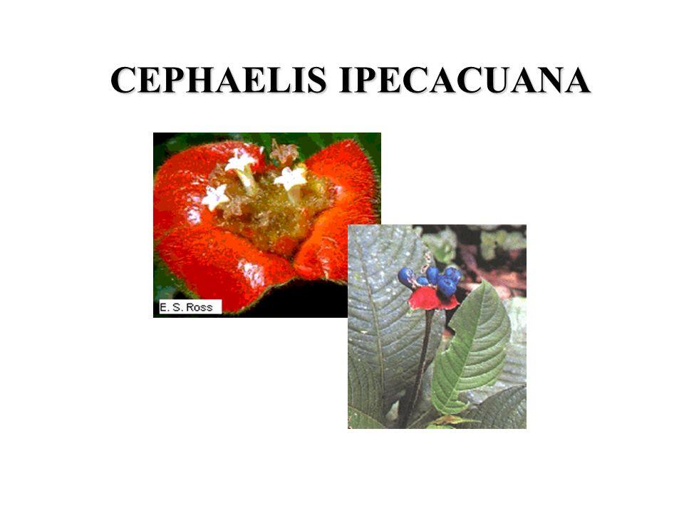CEPHAELIS IPECACUANA