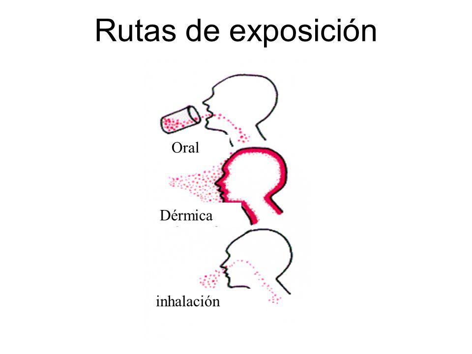 Rutas de exposición Dérmica inhalación Oral