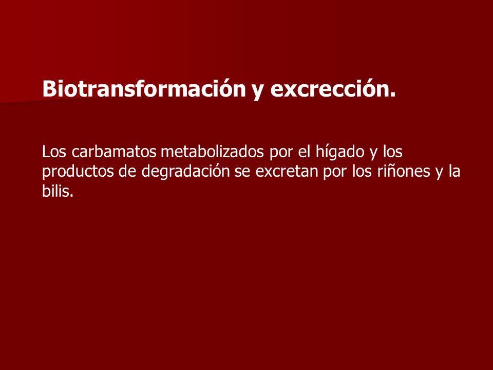 Biotransformación y excrección. Los carbamatos metabolizados por el hígado y los productos de degradación se excretan por los riñones y la bilis.