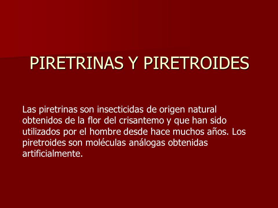 Las piretrinas son insecticidas de origen natural obtenidos de la flor del crisantemo y que han sido utilizados por el hombre desde hace muchos años.