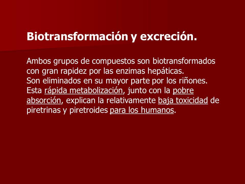 Biotransformación y excreción. Ambos grupos de compuestos son biotransformados con gran rapidez por las enzimas hepáticas. Son eliminados en su mayor