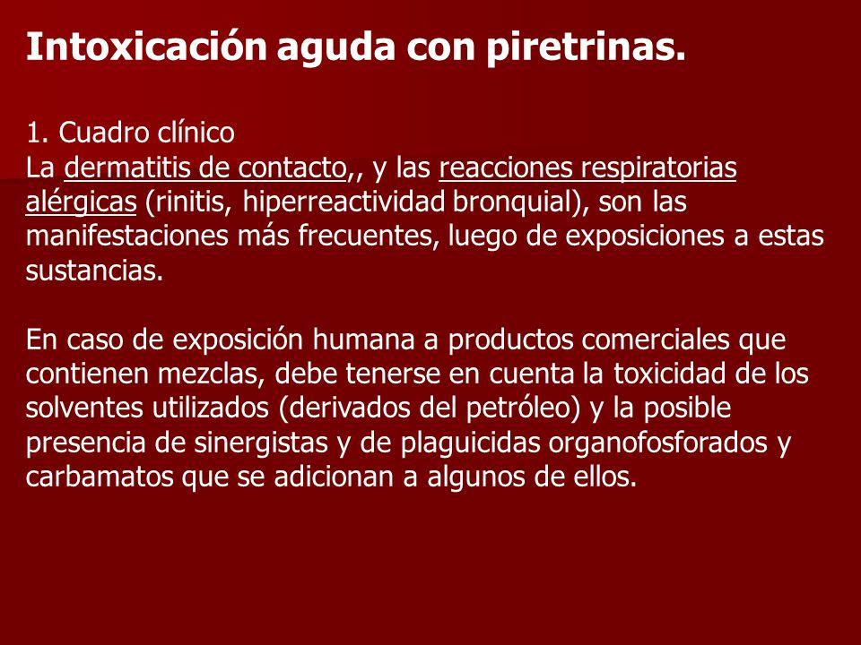 Intoxicación aguda con piretrinas. 1. Cuadro clínico La dermatitis de contacto,, y las reacciones respiratorias alérgicas (rinitis, hiperreactividad b