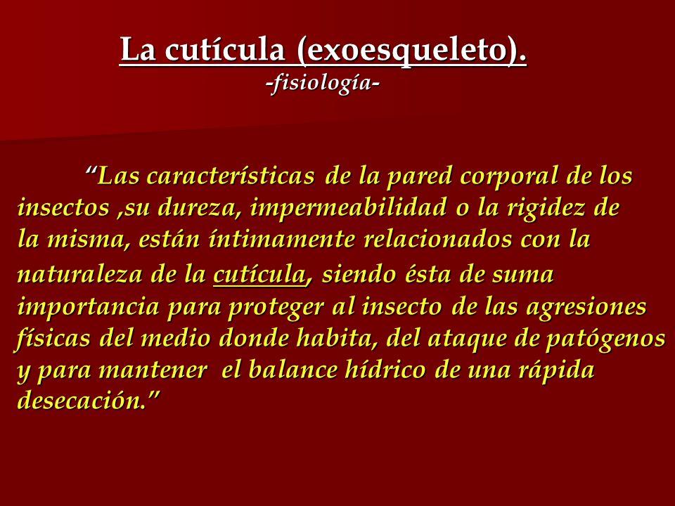 La cutícula (exoesqueleto). -fisiología- Las características de la pared corporal de losLas características de la pared corporal de los insectos,su du