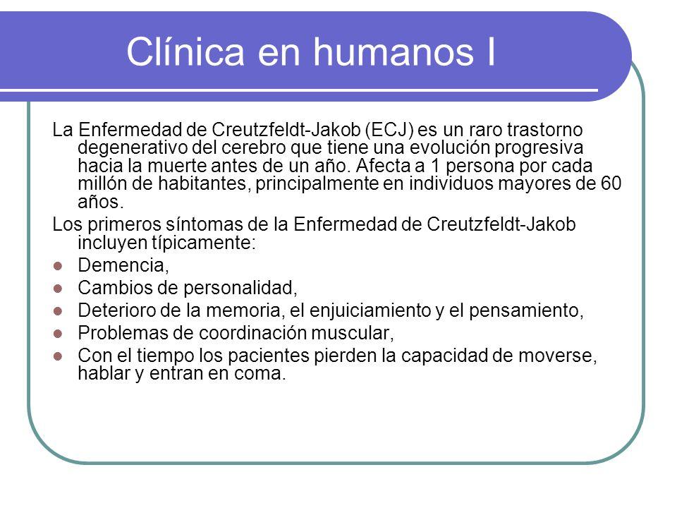 Clínica en humanos I La Enfermedad de Creutzfeldt-Jakob (ECJ) es un raro trastorno degenerativo del cerebro que tiene una evolución progresiva hacia l